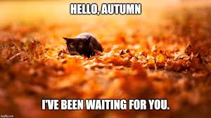 Autumn Meme - image tagged in autumn imgflip
