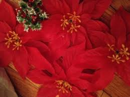 fact or fiction the legend of the poinsettia
