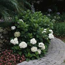 home gardening tips southern living