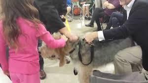 belgian sheepdog national specialty the national dog show 2014 otterhound youtube