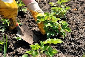 how to grow a garden for dummies the garden inspirations