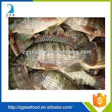 tilapia fish farming tilapia fish farming suppliers and