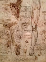 leonardo da vinci the anatomical artist drawing academy