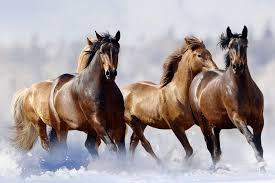 fake horse head did a russian lake flash freeze a herd of horses howstuffworks