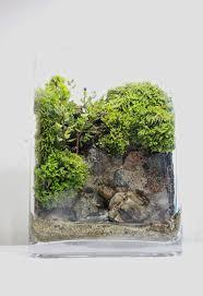150 best grow terrariums images on pinterest plants gardening