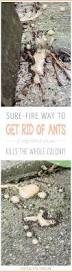 best 25 get rid of spiders ideas on pinterest spider remedies
