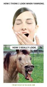 Funny Memes Pinterest - how i really yawn funny memes