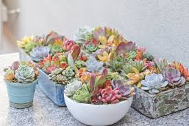 succulent arrangements succulent collection i of succuentsi of succuents