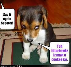 boxer dog jokes funny dog photos with captions 2 motley dogs