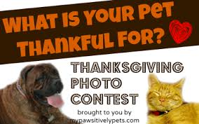 what is your pet thankful for thanksgiving photo contest for