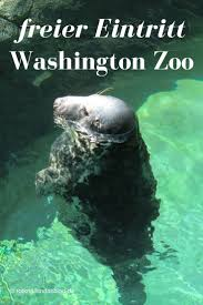 Zoo Lights Tacoma Wa by The 25 Best Washington Zoo Ideas On Pinterest Dc Zoo Washing