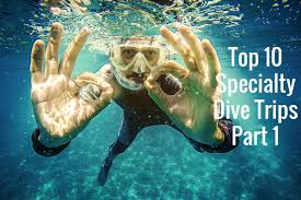 top 10 specialty dive trips part 1 deeperblue