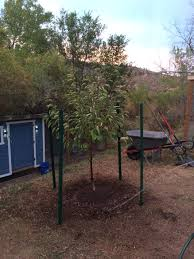 our homestead lifeplanting fruit trees in the colorado foothills