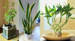 indor plants 10 magical indoor plants to attract love and positive energy