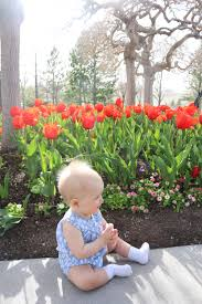 last year thanksgiving tulip festival at thanksgiving point well traveled wife