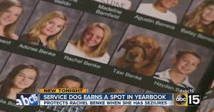 yearbook finder faithful service dog gets his own yearbook photo dogtime