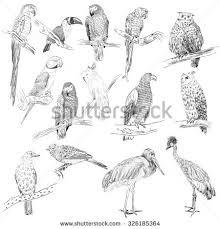 vector sketch birds hand drawn illustration stock vector 326185364