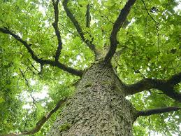 free photo tree log bark aesthetic leaves free image on