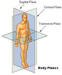 seer training anatomical terminology