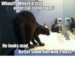 Mad Cat Memes - 25 best memes about grumpy cat grumpy cat memes