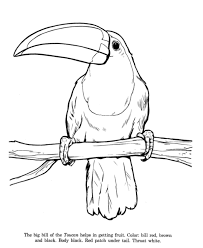 stunning parrot coloring pages inspiration article