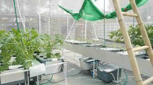 Aeroponic Vertical Garden Veggies Hydroponic Aeroponic Diy Basil Just Sting In Our