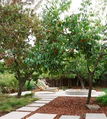 how to grow your own persimmons