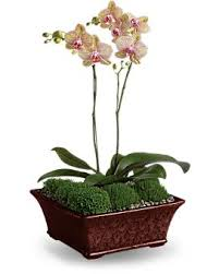 orchid plant 10 best orchids images on flower arrangements flowers