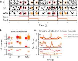 Assembly Row Map Activity Dynamics And Signal Representation In A Striatal Network