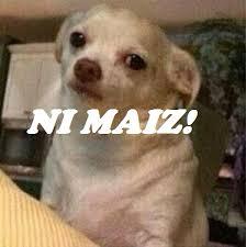 Chihuahua Meme - wow perro chihuahua meme facebook