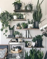 Plants Home Decor Best 10 Living Room Plants Ideas On Pinterest Apartment Plants