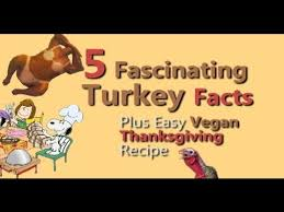 thanksgiving turkey facts and easy vegan recipe