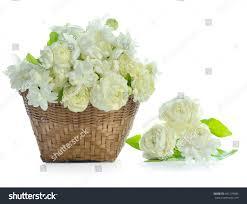 Jasmine Tea Flowers - 100 tea flower free images nature tea flower floral aroma