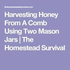 Harvesting Honey From Top Bar Hive Glass And Fine Wood Honey Comb Buffet Holder Honeycomb Display