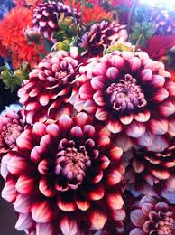 seattle flowers 17 best pike place market flowers images on pike place