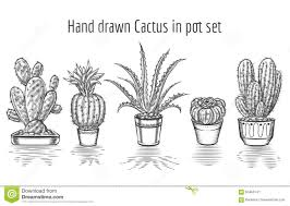 cactus drawing sketch of cactus in a pot stock vector image