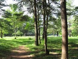 Brimfield state forest wikipedia