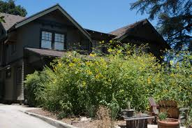 southern california native plants my garden archives weeding wild suburbia