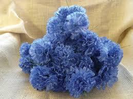 blue carnations blue carnations premier equestrian