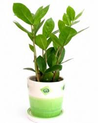 house plants that don t need light dress up your home with these indoor plants that don t need sunlight