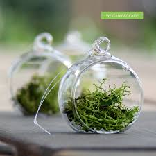 2 inch hanging globe glass orb terrarium container wedding