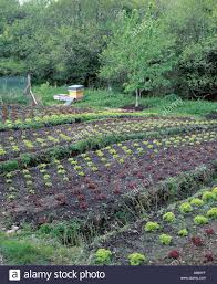 self sustaining garden self sufficient country garden grow your own green leafy stock