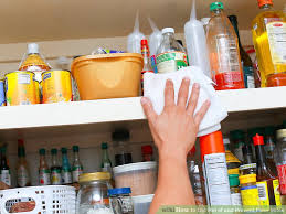 bugs in kitchen cabinets get rid of kitchen cabinets
