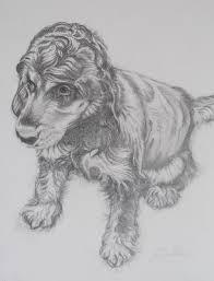 pencil drawings of pets gallery julie cohen