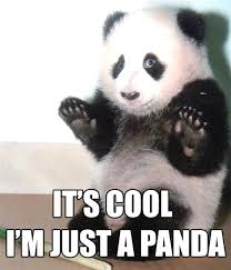 Funny Panda Memes - funny panda photo the best panda of 2018