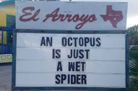 Funny Spiders Memes Of 2017 - an octopus funny pictures quotes memes funny images funny