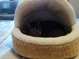 cute soft and comfy hamburger bed for cats