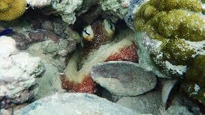 an octopus u0027s garden more than just a song