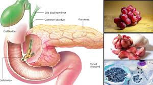 Anatomy Pancreas Human Body 5 Foods That Your Pancreas Will Surely Love Youtube