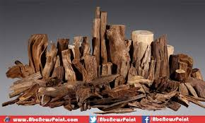 top ten most expensive wood in the world top 10 lists